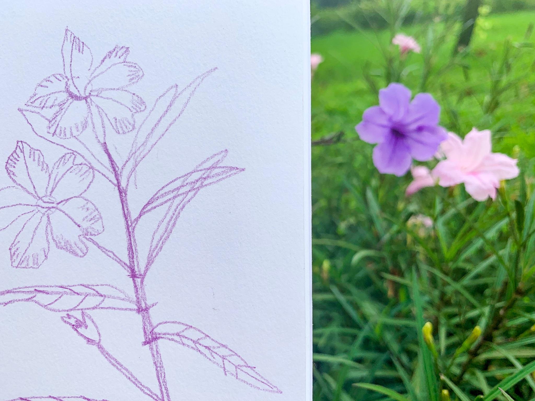 Outdoor sketching in the Garden in Hong Kong | Gina Maldonado - Coco Gigi Design - Illustration and surface design 2.JPG