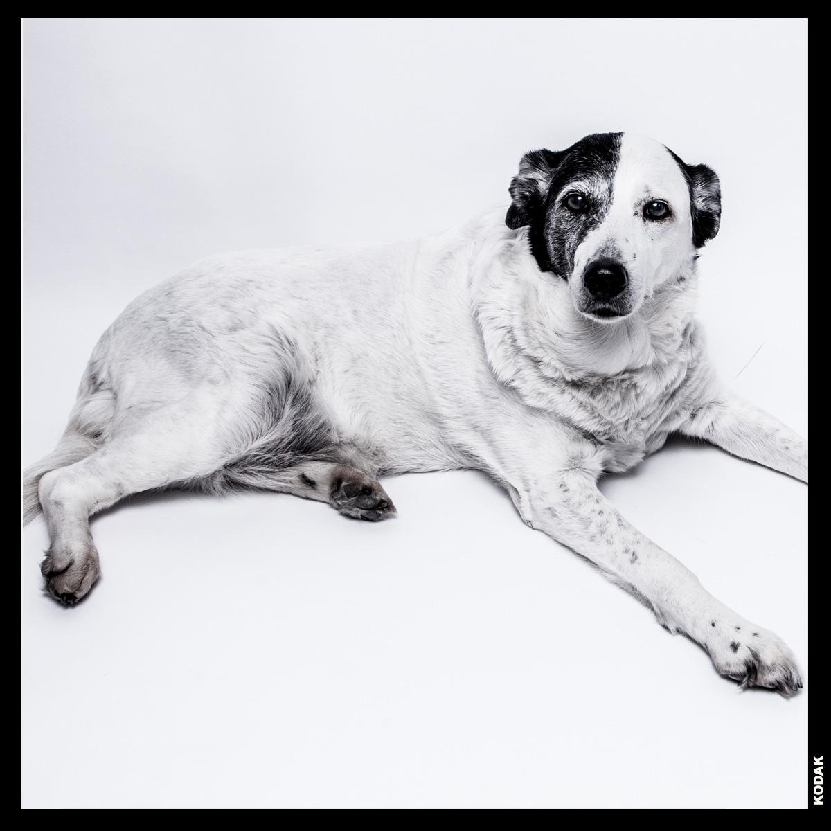 Maisie RIP - Maisie loving Dog