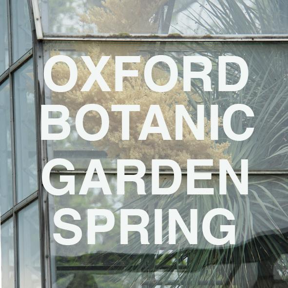 TEST OXFORD.jpg