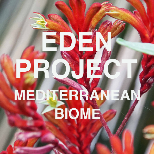 Eden Project M Cover.jpg