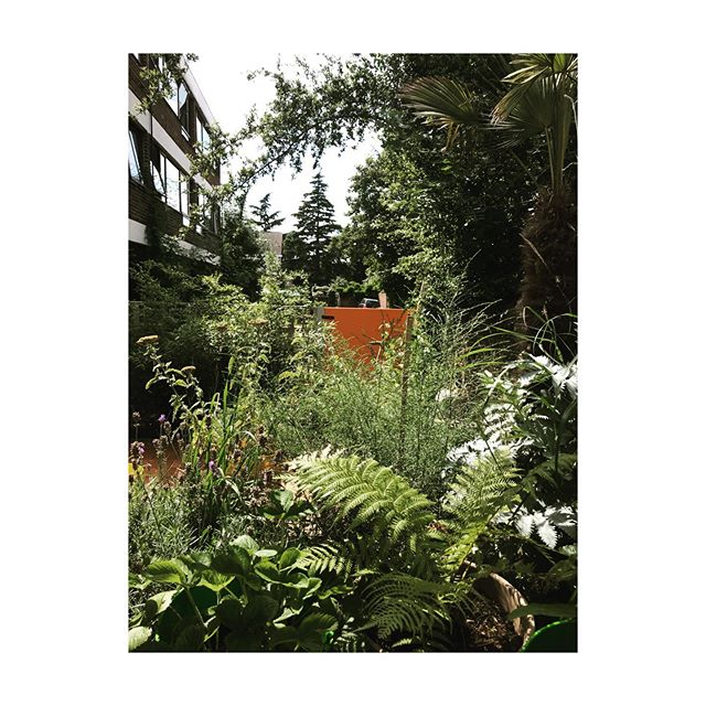 View through the Forest Hill jungle... #backgarden #layeruponlayer #workingfromhome #viewfromtheoffice #foresthill #southeastlondon #urbanjungle