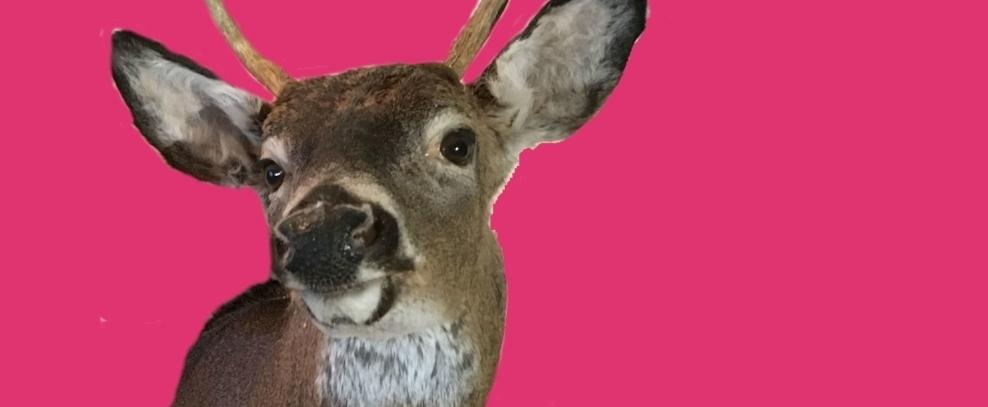 Deer  by Cricket Epstein