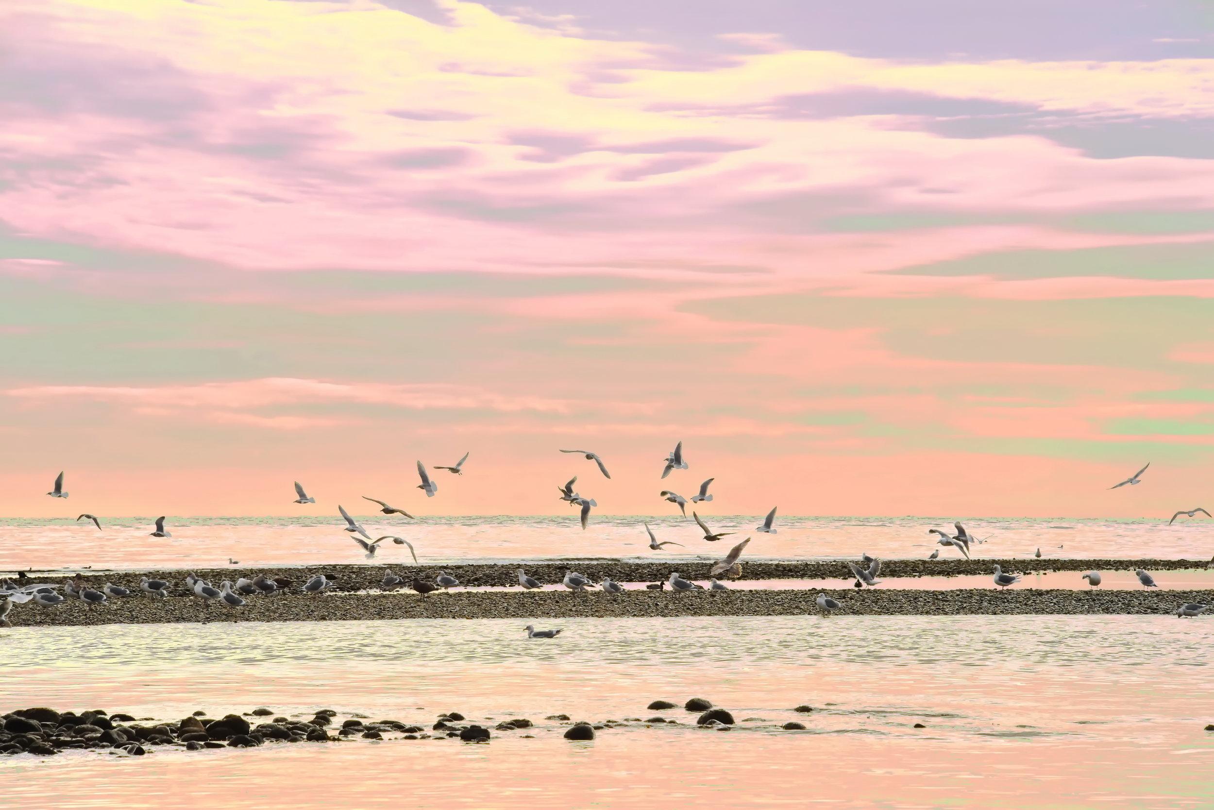 Morning Sky Sunshine Coast, B.C.    16 x 24 Canvas 225.00 16 x 24 HD Metal 300.00 12 x 18 HD Metal 200.00    16 x 24 Brushed Aluminum 225.00 12 x 18 Brushed Aluminum 150.00