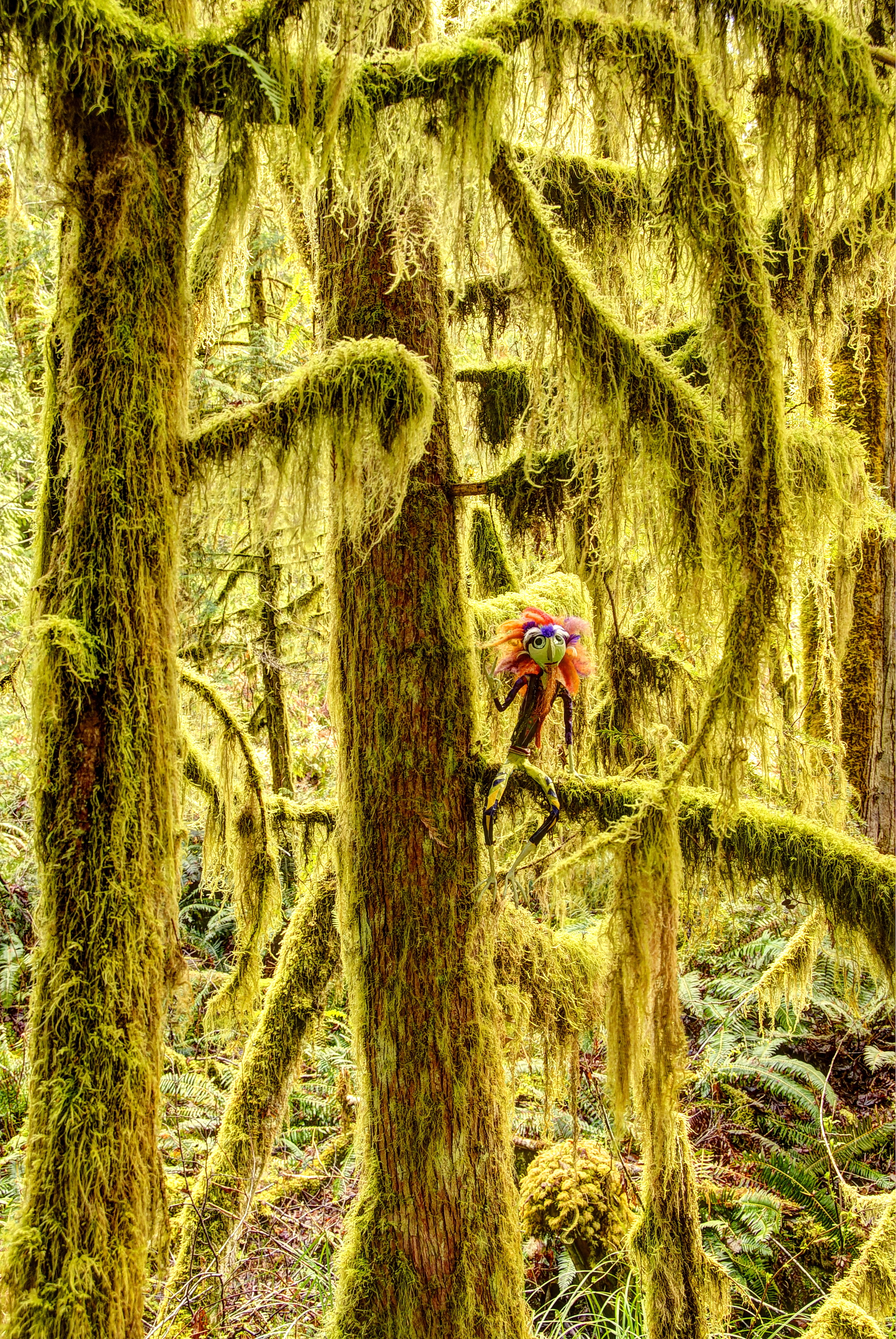 Moseley Hoo, Hangin' out in Egmont Sunshine Coast, BC    8 x 12 Canvas 80.00 8 x 12 HD Metal 100.00 also available in 5 x 7 Art Card
