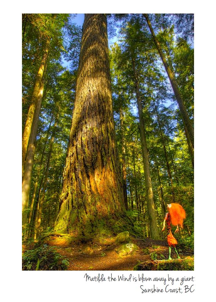 web size Matilda and big tree card.jpg