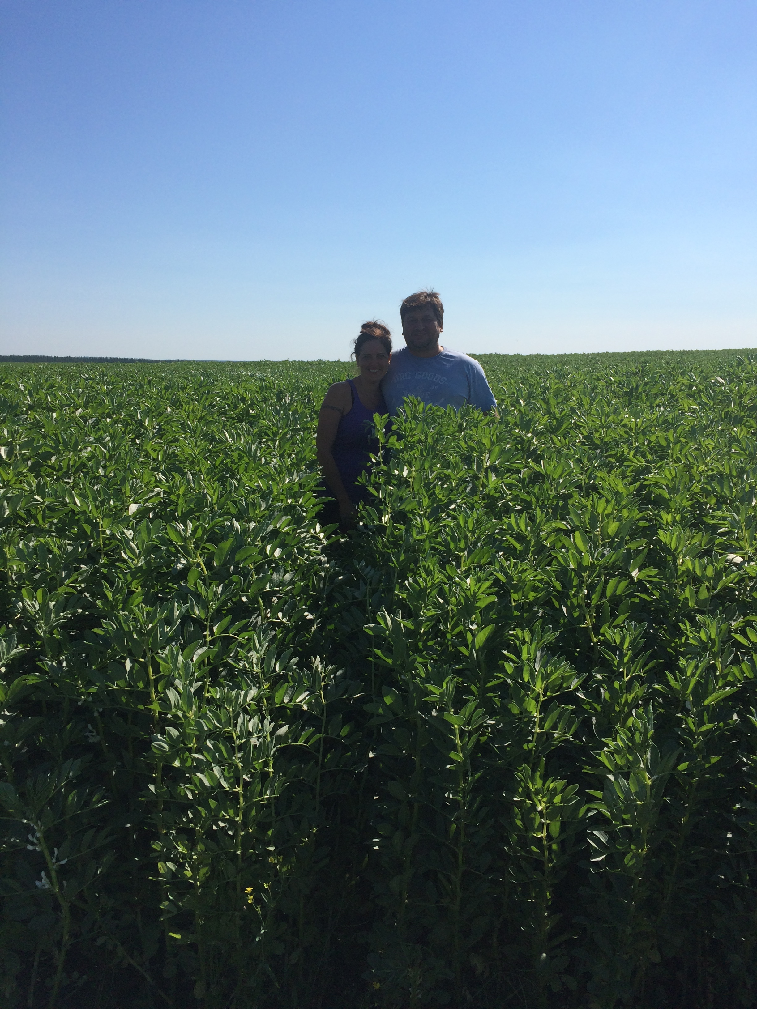 Here is Kevin & Sonya Federkiewicz hanging out in their Snowbird faba bean crop on July 26. Great yields on the way!