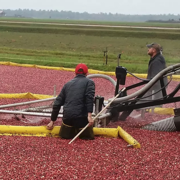 The Washington Post    In Wisconsin, Visitors Can Literally Dip Their Toes Into The Cranberry Harvest    Take a ride down the Cranberry Highway to sample pie and step into marshes. Don't forget your waders!