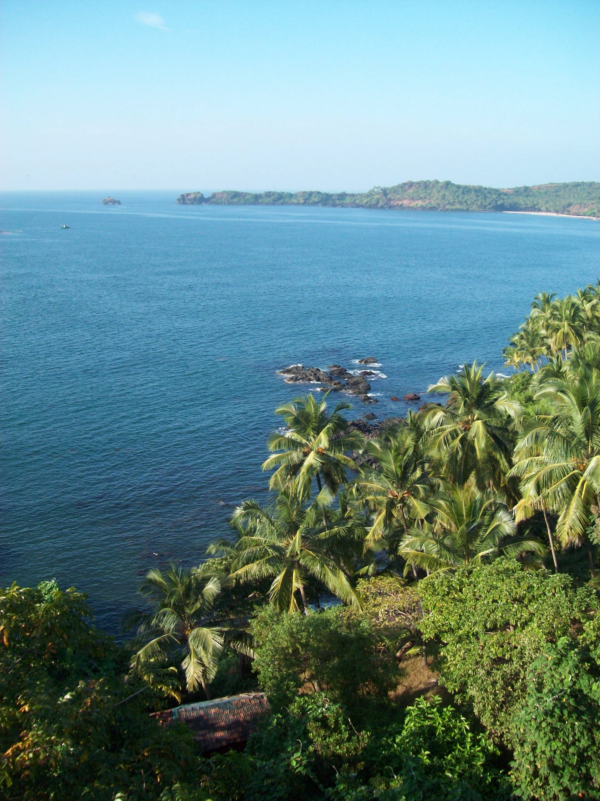 Tropical trees along the Indian coast