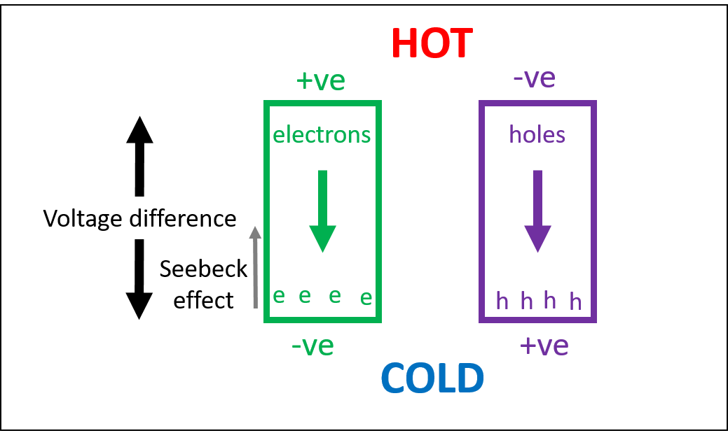 How a temperature gradient drives the movement of charge carriers, creating a potential.