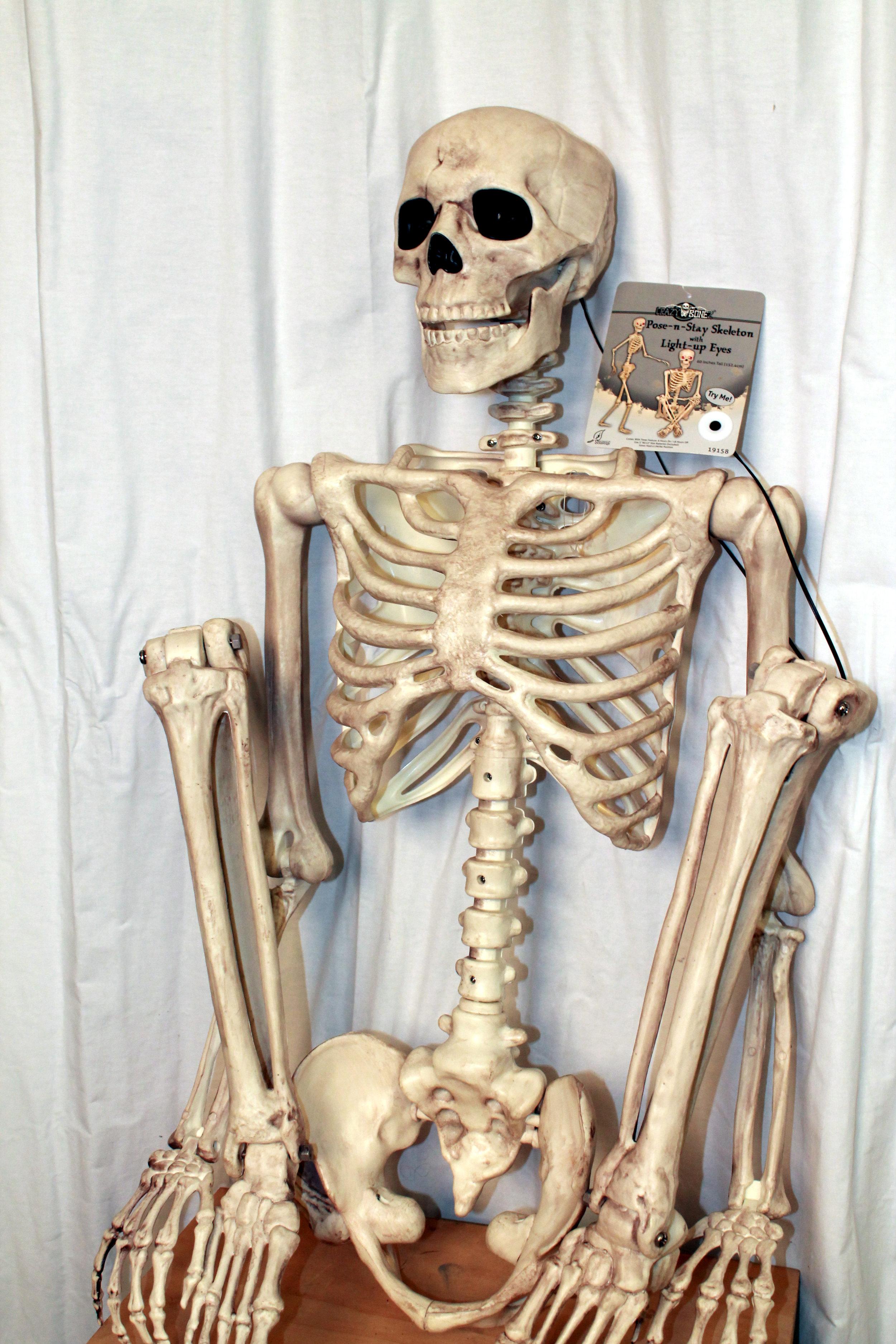 TT2_PlasticSkeleton.jpg