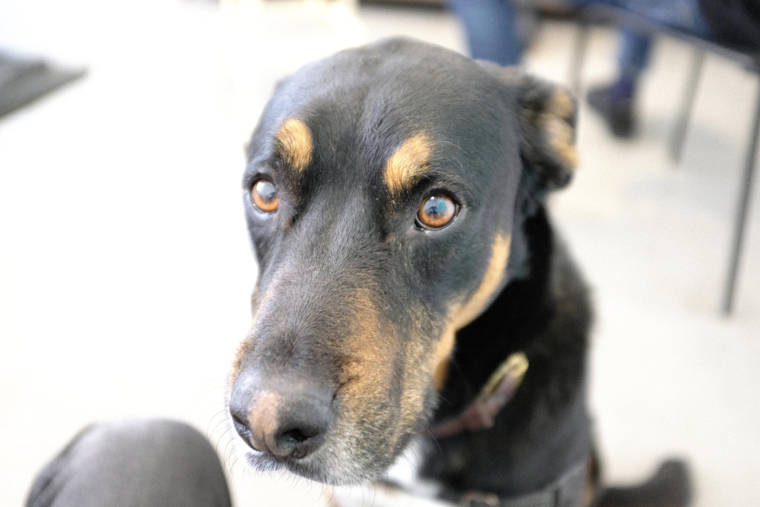 World's sweetest studio companion, Charlie