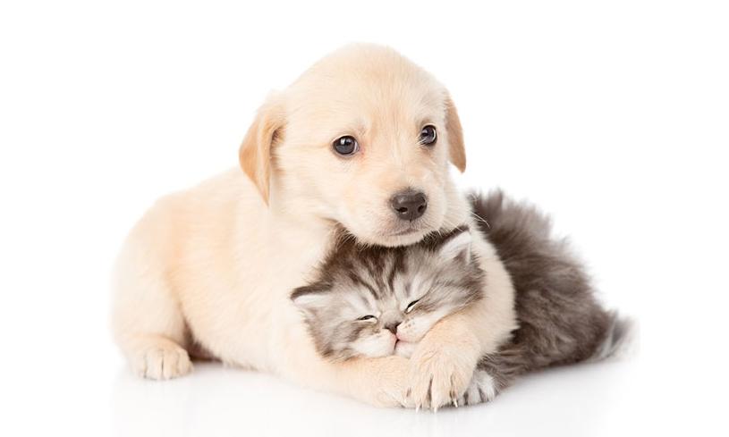 sample-animal-adoption.jpg