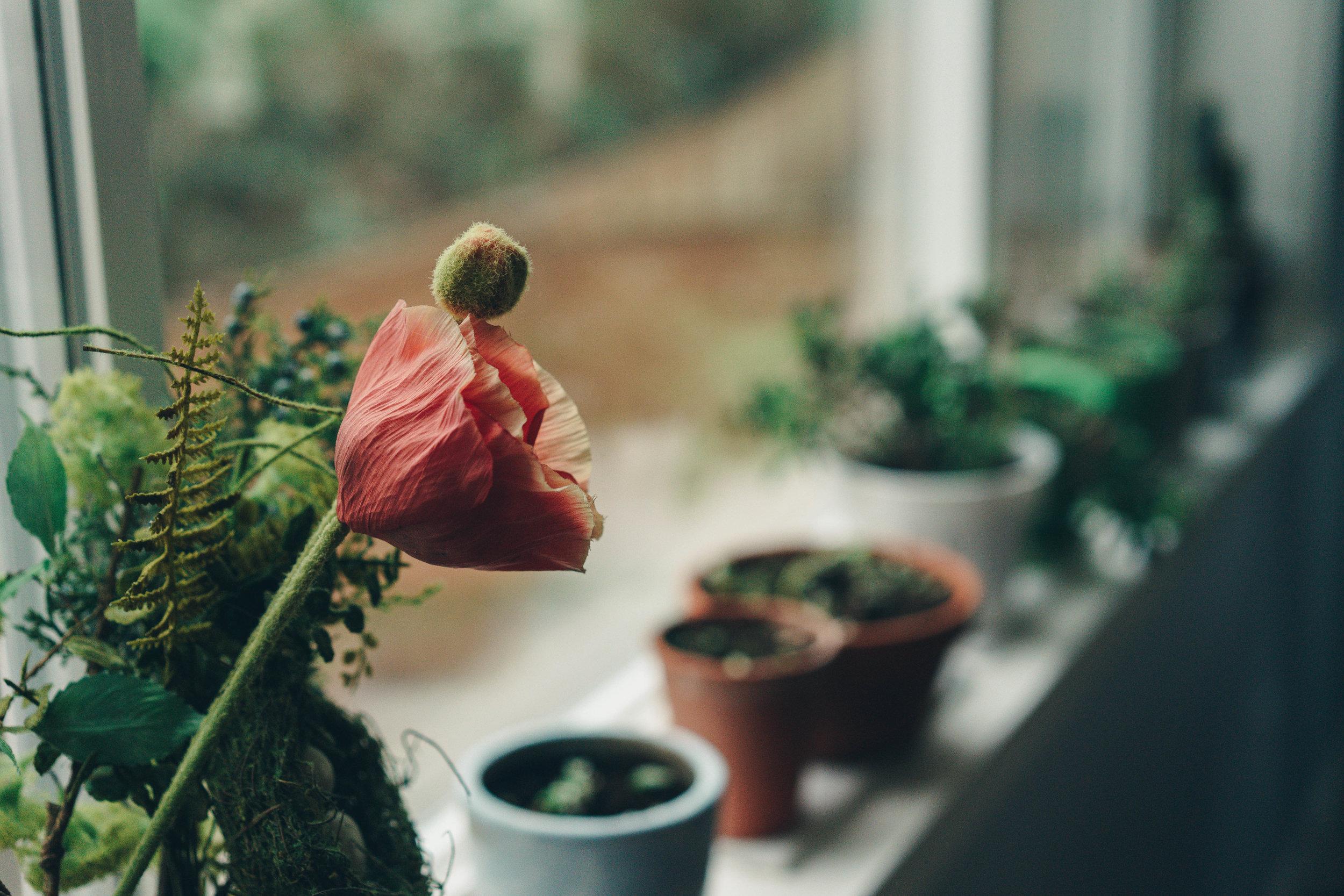 Her plants