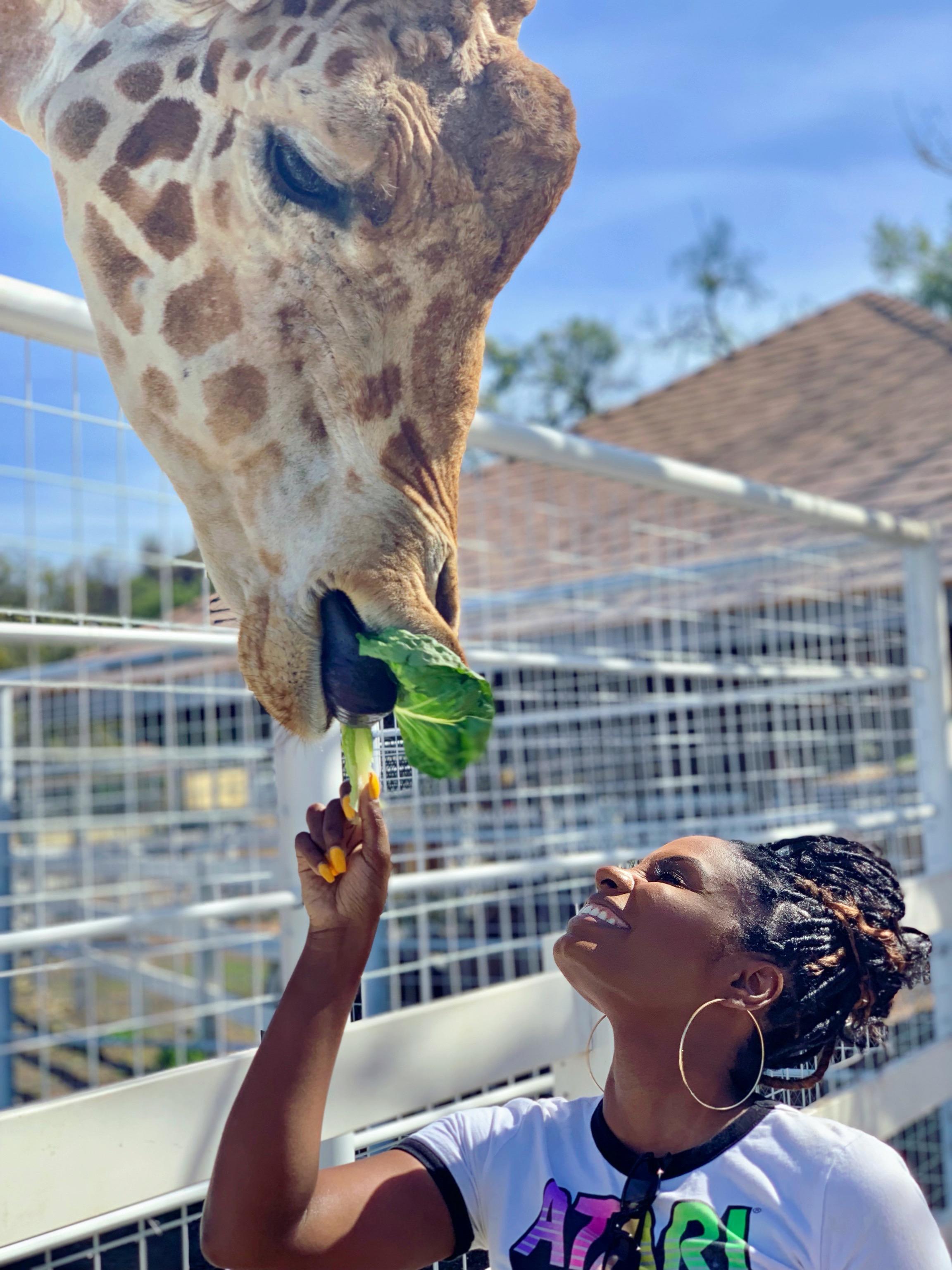 Stanley The Giraffe