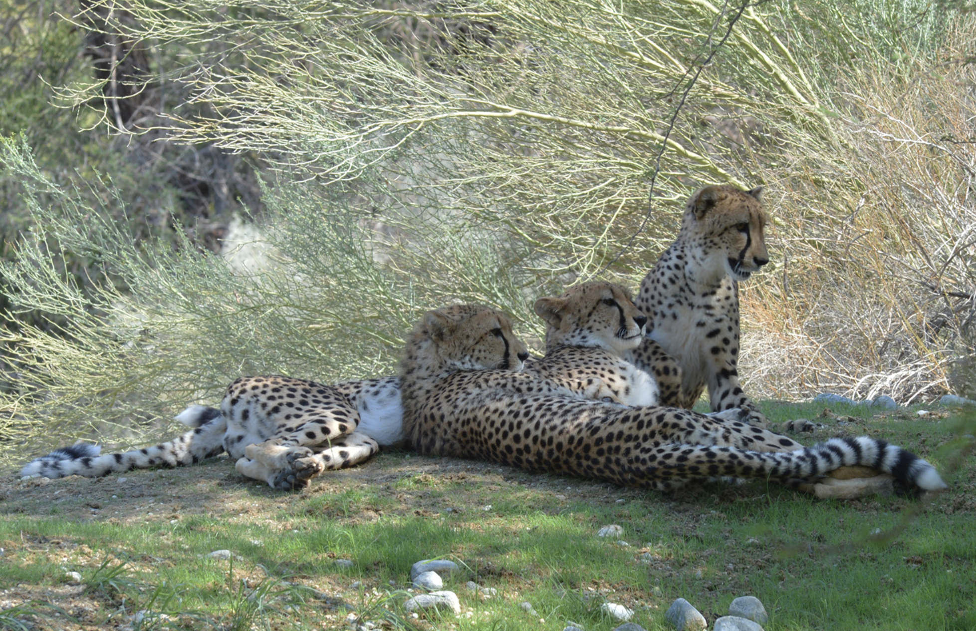 Image courtesy of The Living Desert Zoo and Gardens.