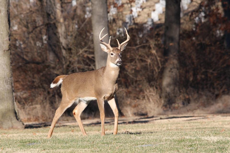 Sunday Hunting in Pennsylvania. -
