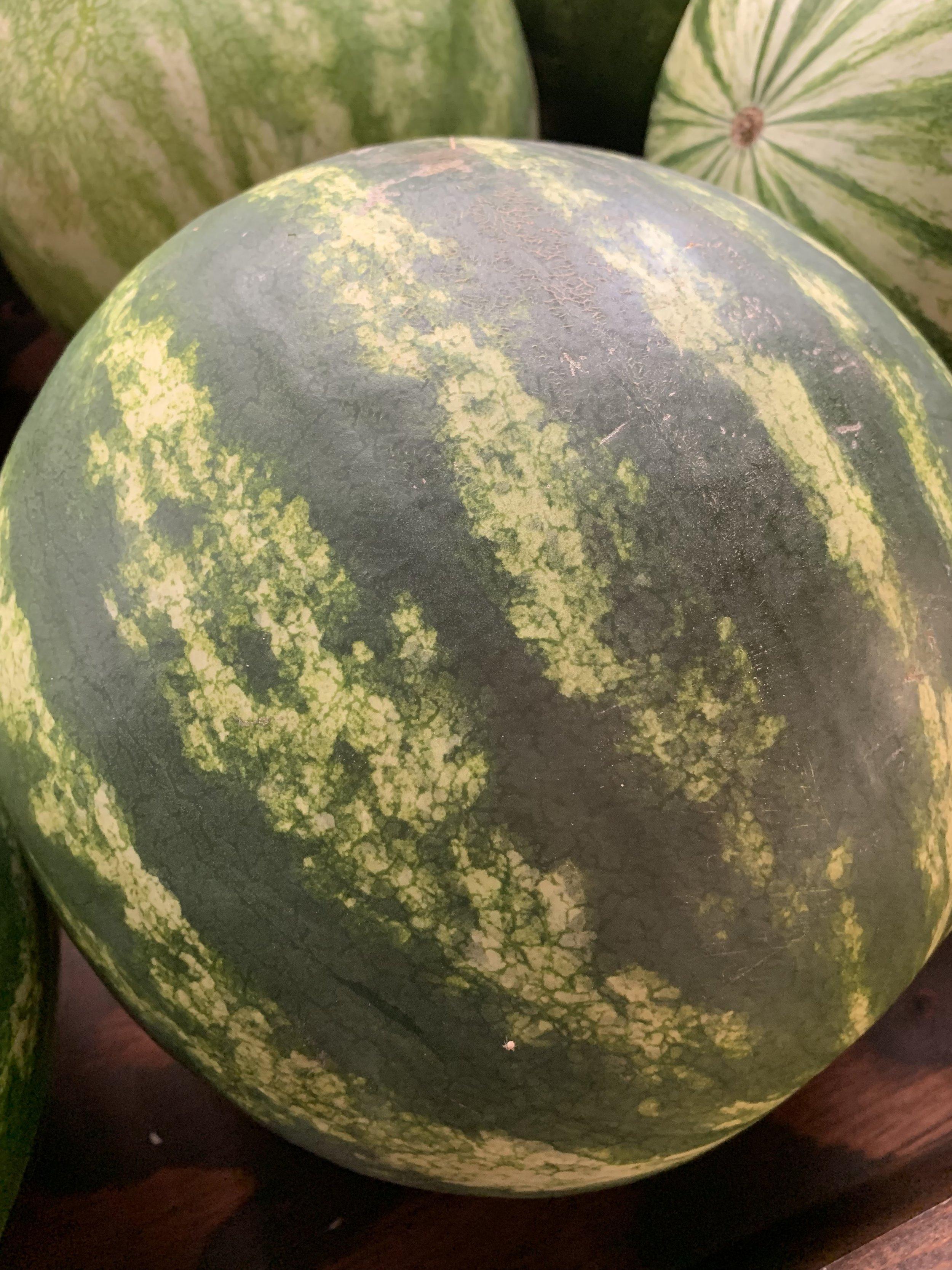 Hermiston Watermelon