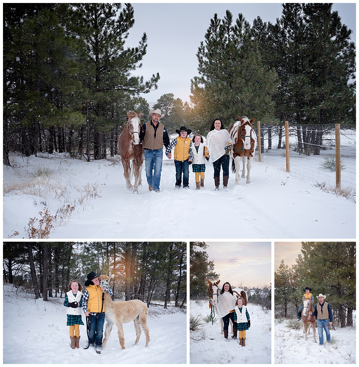 family-dog-photography-parker-denver-colorado-olson-1.jpg