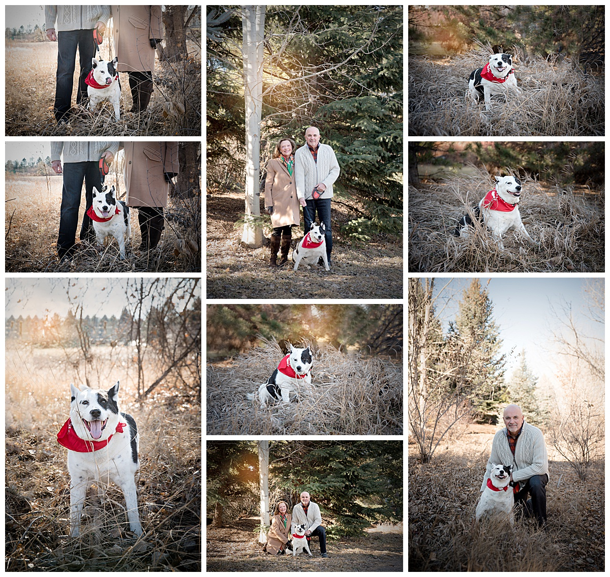 family-dog-photography-greenwood-village-colorado-rosie.jpg