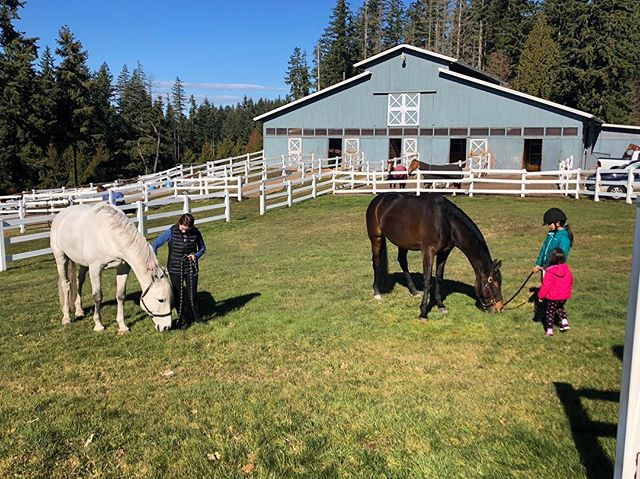 There was green grass left after all of that snow! A couple of our young riders grazing their horses after a fun Saturday lesson.