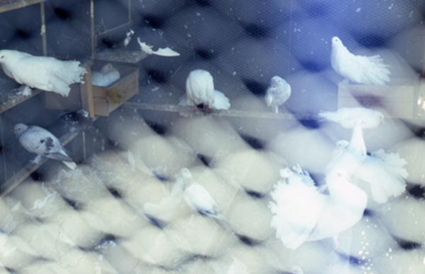 Birds, 2011