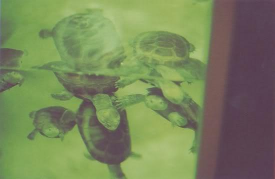 Turtles, 2008