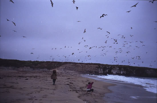 Birds, 2009
