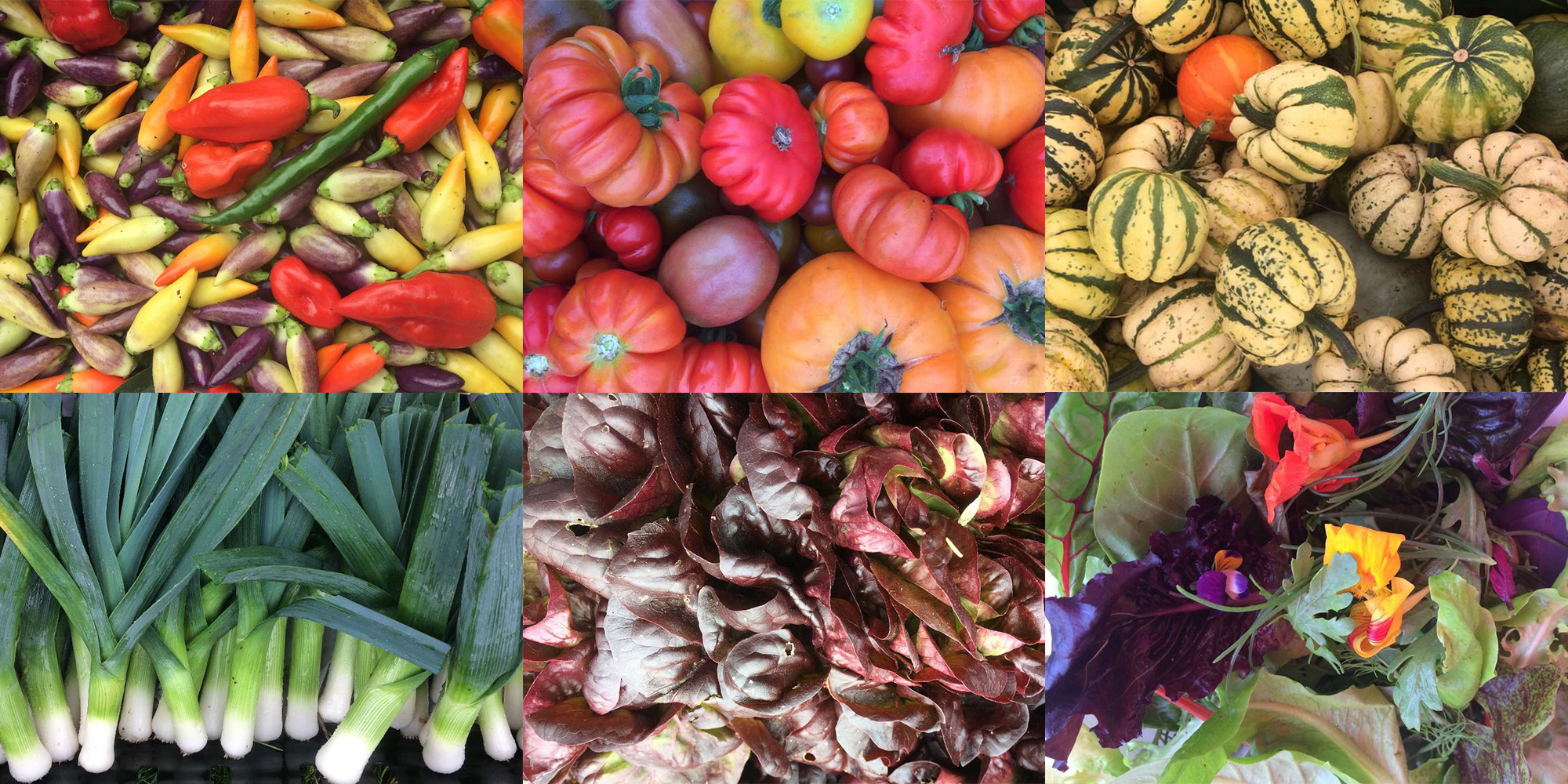 Eves-hill-veg-co-buy-our-veg.jpg