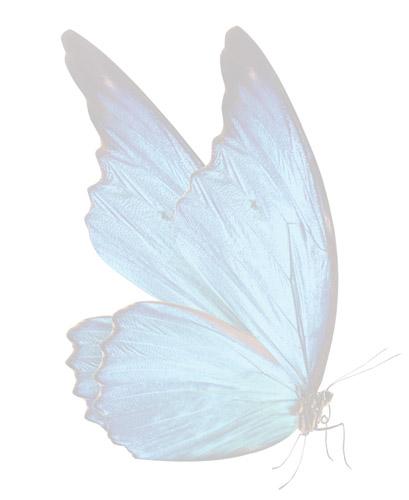 Butterfly-fade.jpg