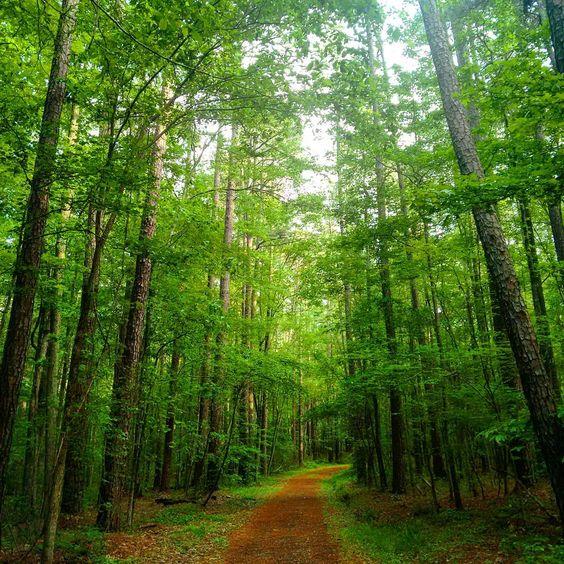 Duke Forest, c/o @ sushmita.samaddar