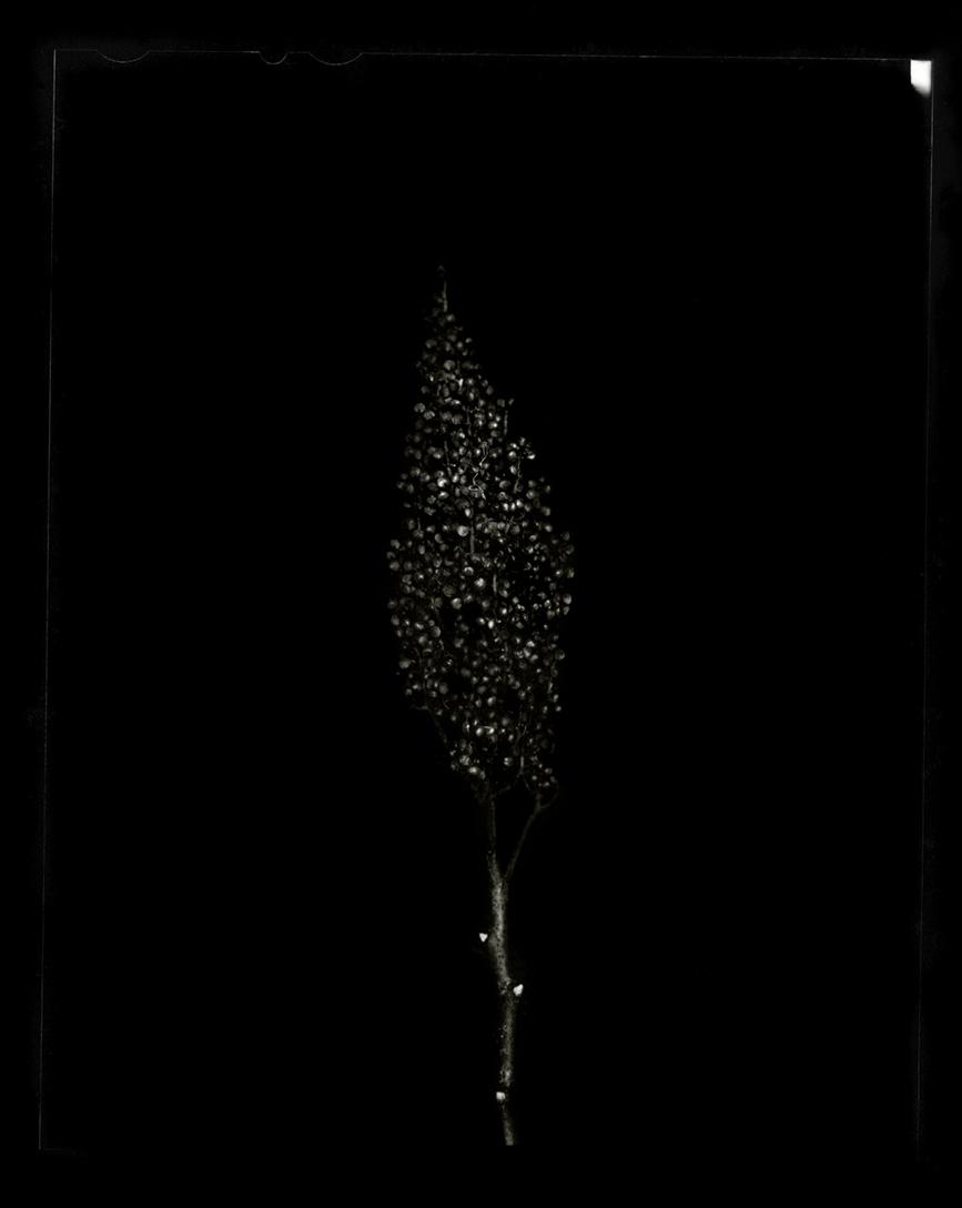 plant-8.jpg