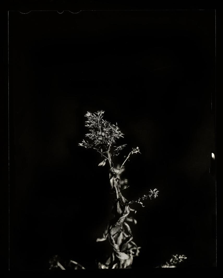 plant-0002-web.jpg