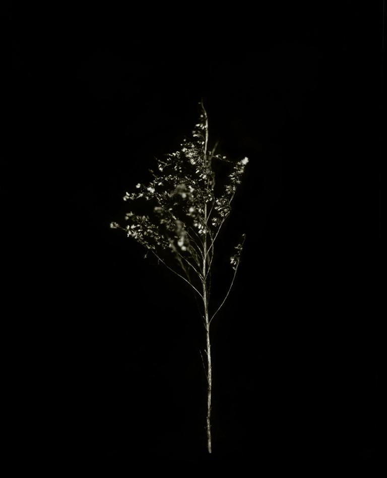 plant-7.jpg