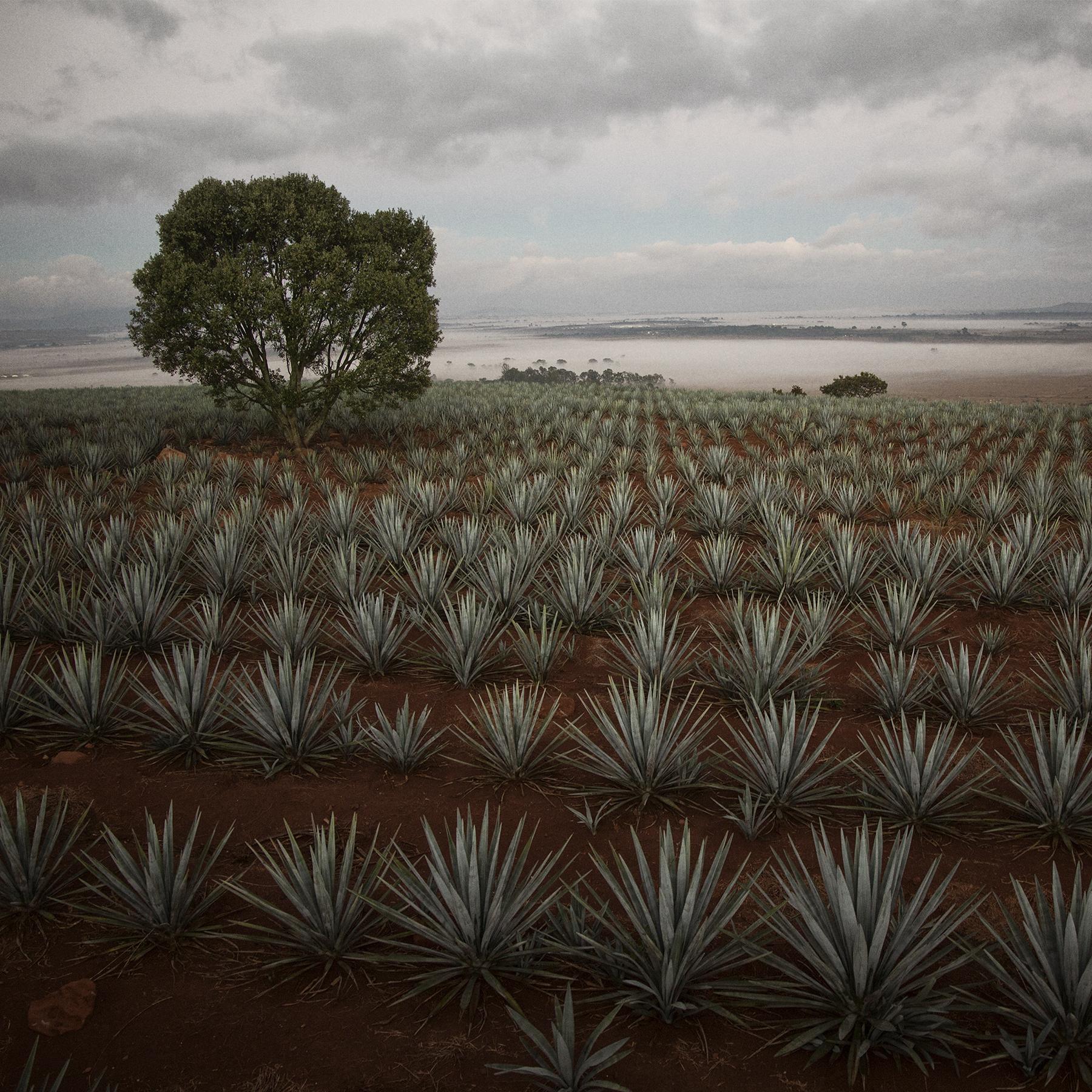 tequila tromba -