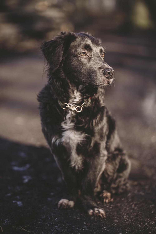 Die Räuberhunde in der Natur-49