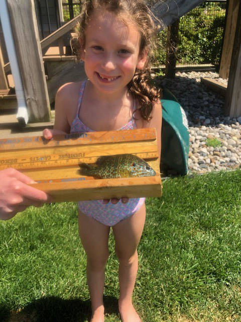 Maggie 7 inch Sunfish