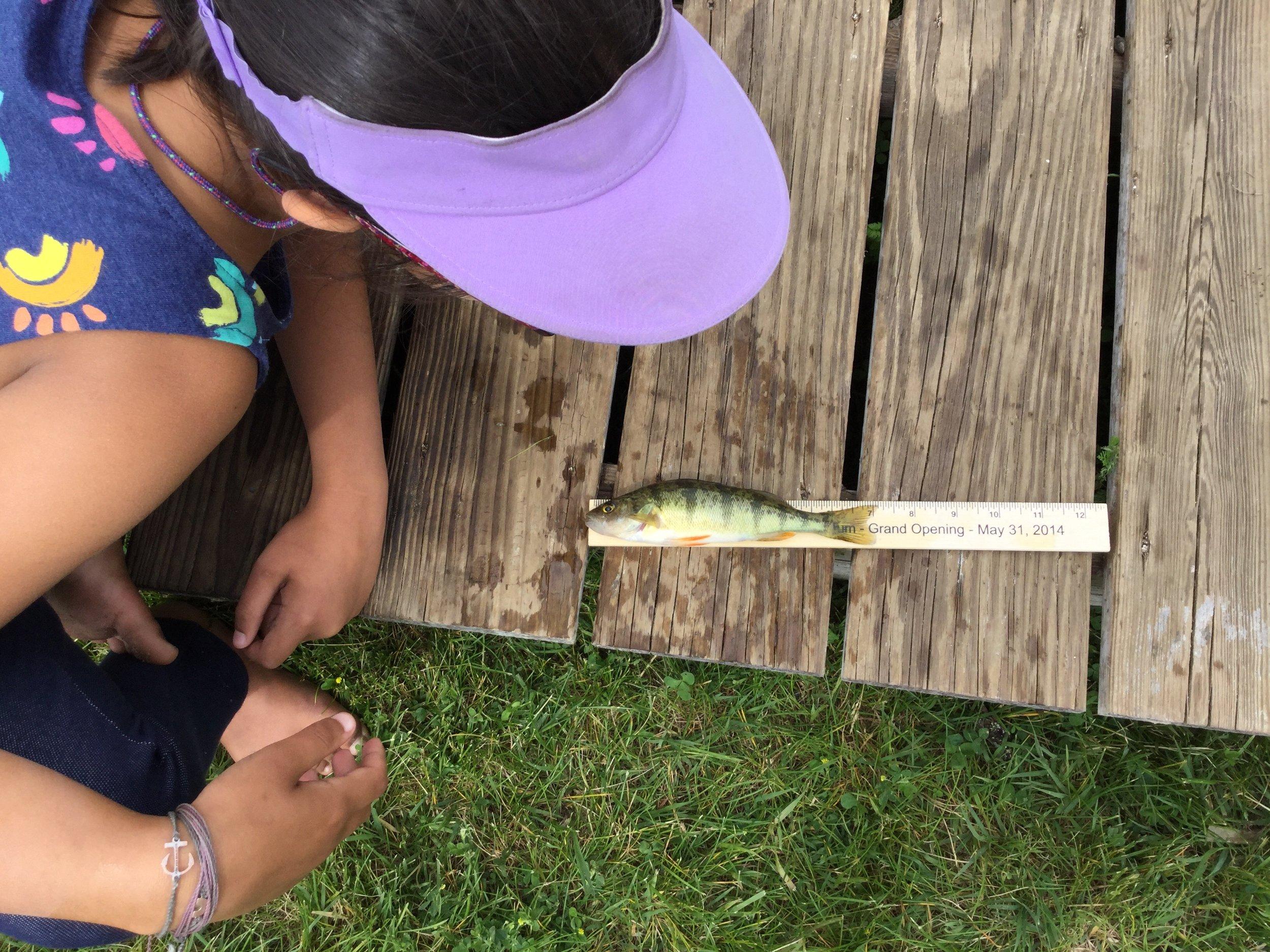 Uma 7.25 inch Perch