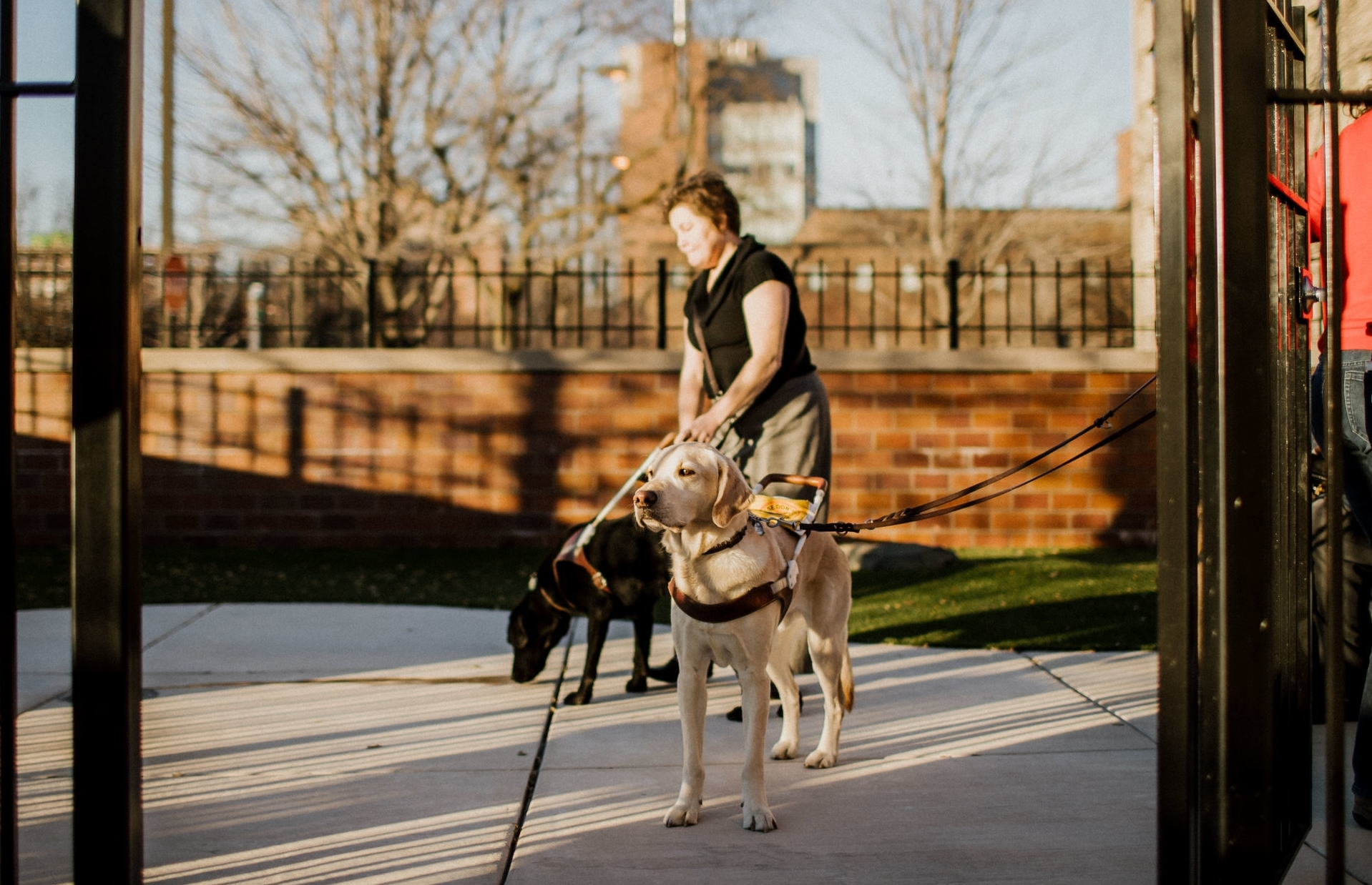 Chicago Lighthouse employees are escorted to the agency's beautiful outdoor patio by their trusty guide dogs.