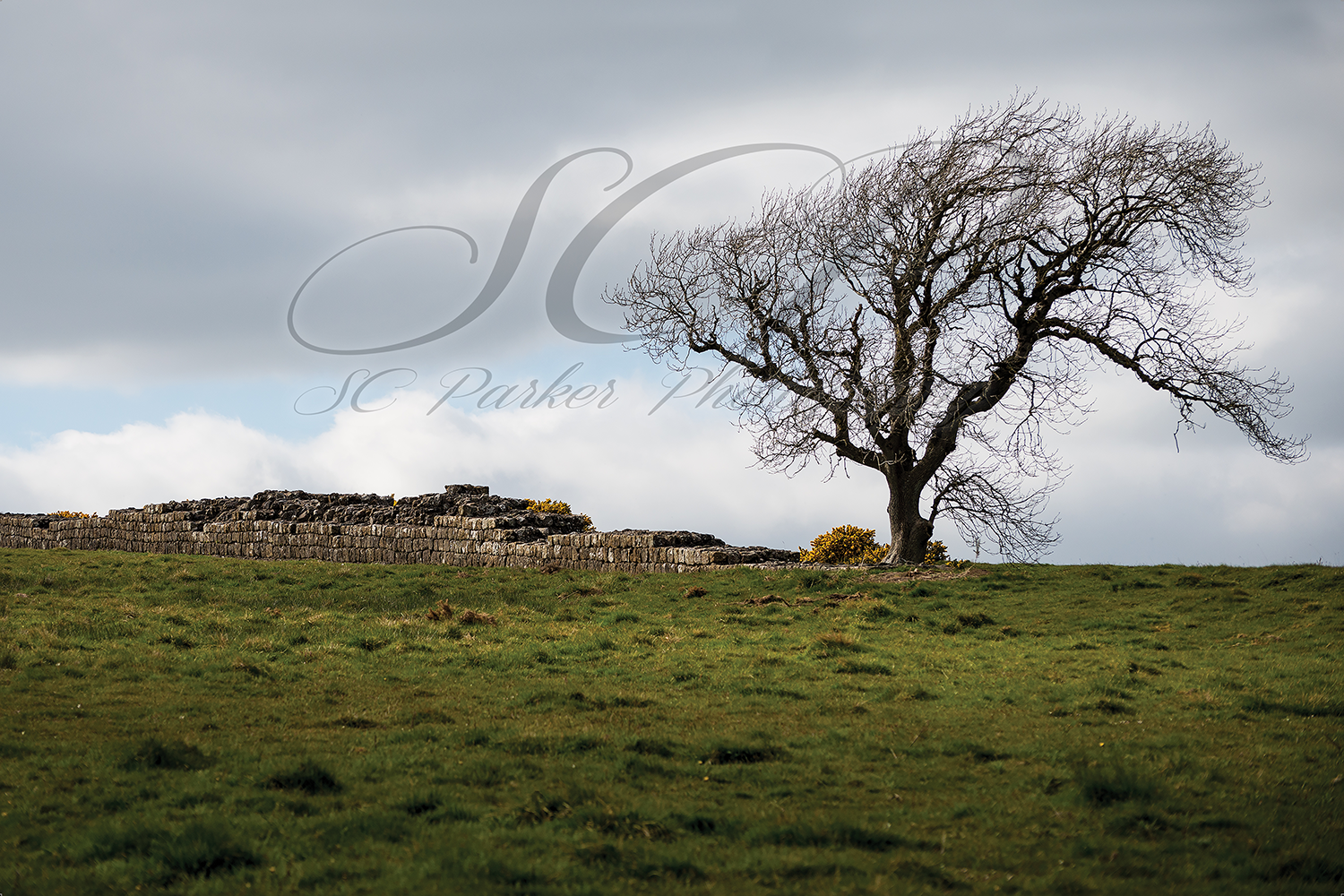 Website_Hadrian's Wall Northern England 8x12 Samantha Parker. SCParkerpPhotography.png