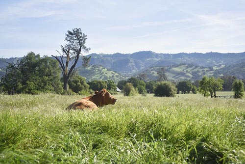 casa_rosa_farms_web.jpg