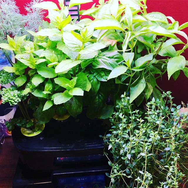 Thankful for my office herb garden... #nature #greenery #selfcare