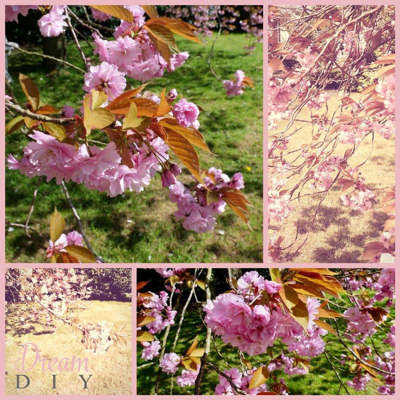 cherry tree1.png