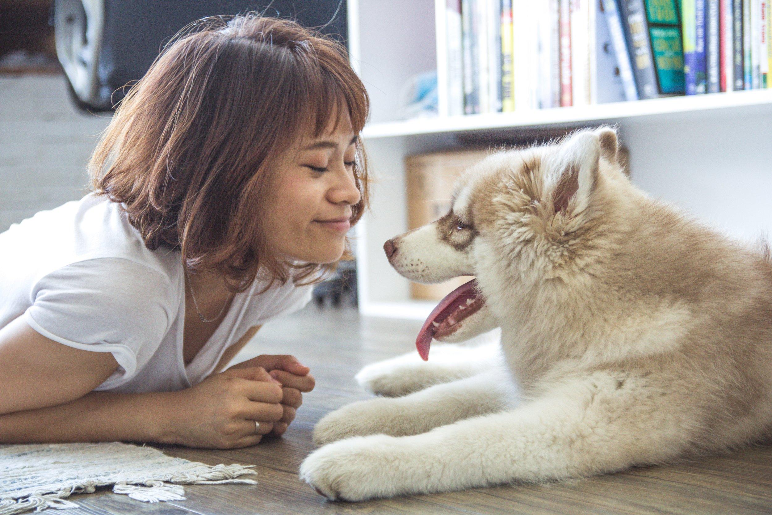 Dog and woman eye contact