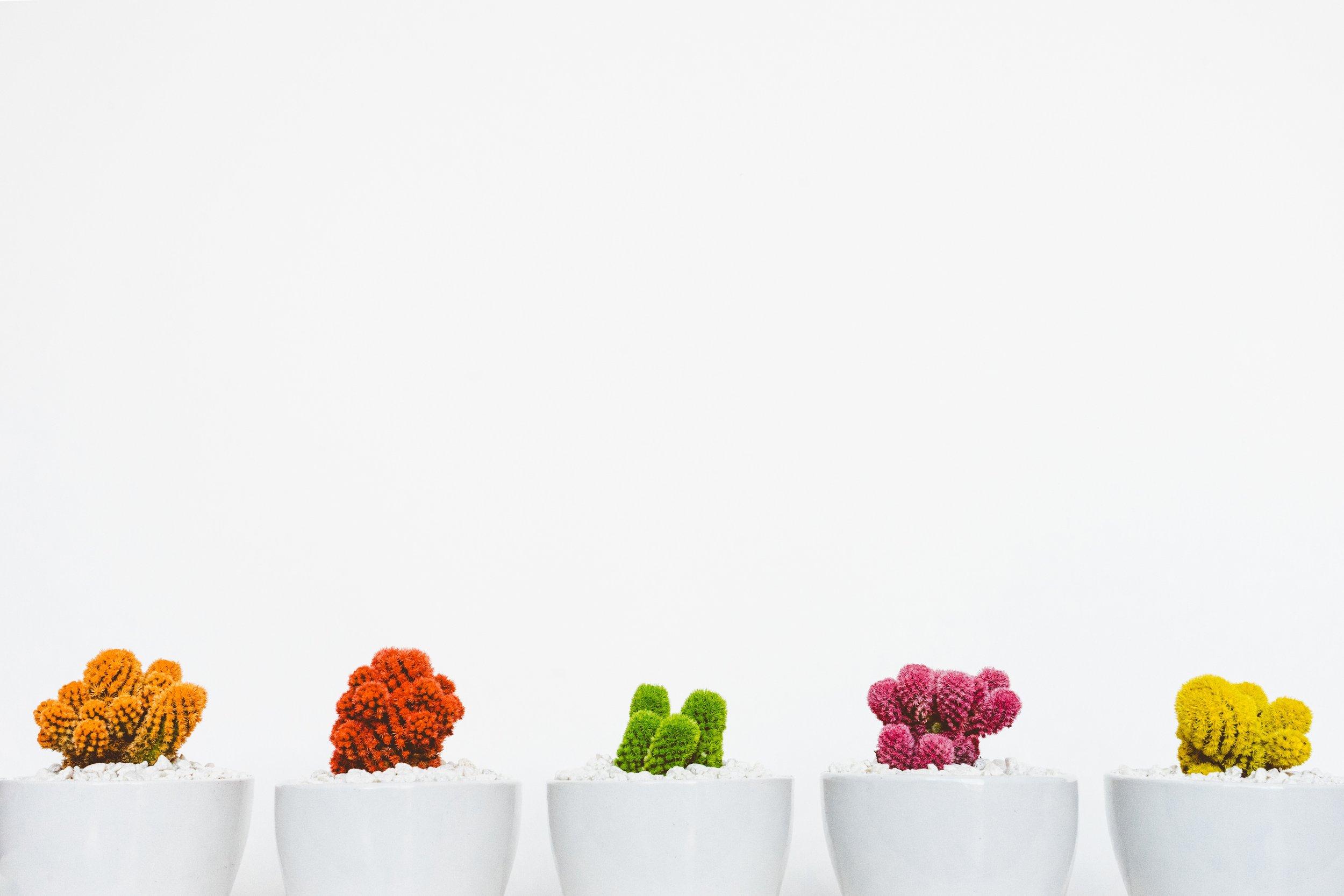 RG colorful plants .jpg
