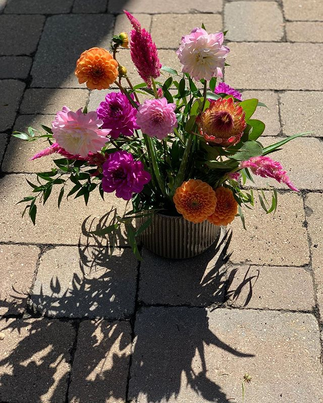 💗 . . . . . . . . . . #floral #flowers #chicago #design #chicagocreative #chicagofloral #floraldesign #chicagoflorist #florist #evanstonflorist #blooms #nightshade #nightshadechicago #nightshadeflorals #💐 #womenowned #womanowned #chicagowomen #shopsmall #shoplocal  #dahlia