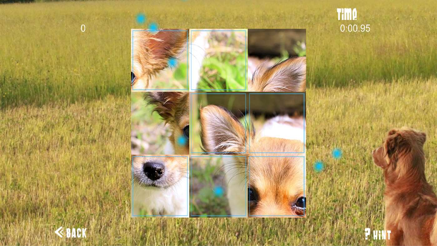Puppy Puzzles