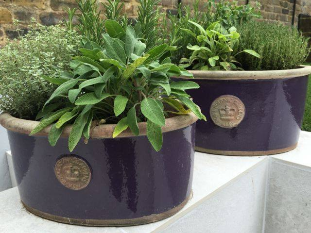 Royal Kew Garden glazed flower pots - filled with herbs