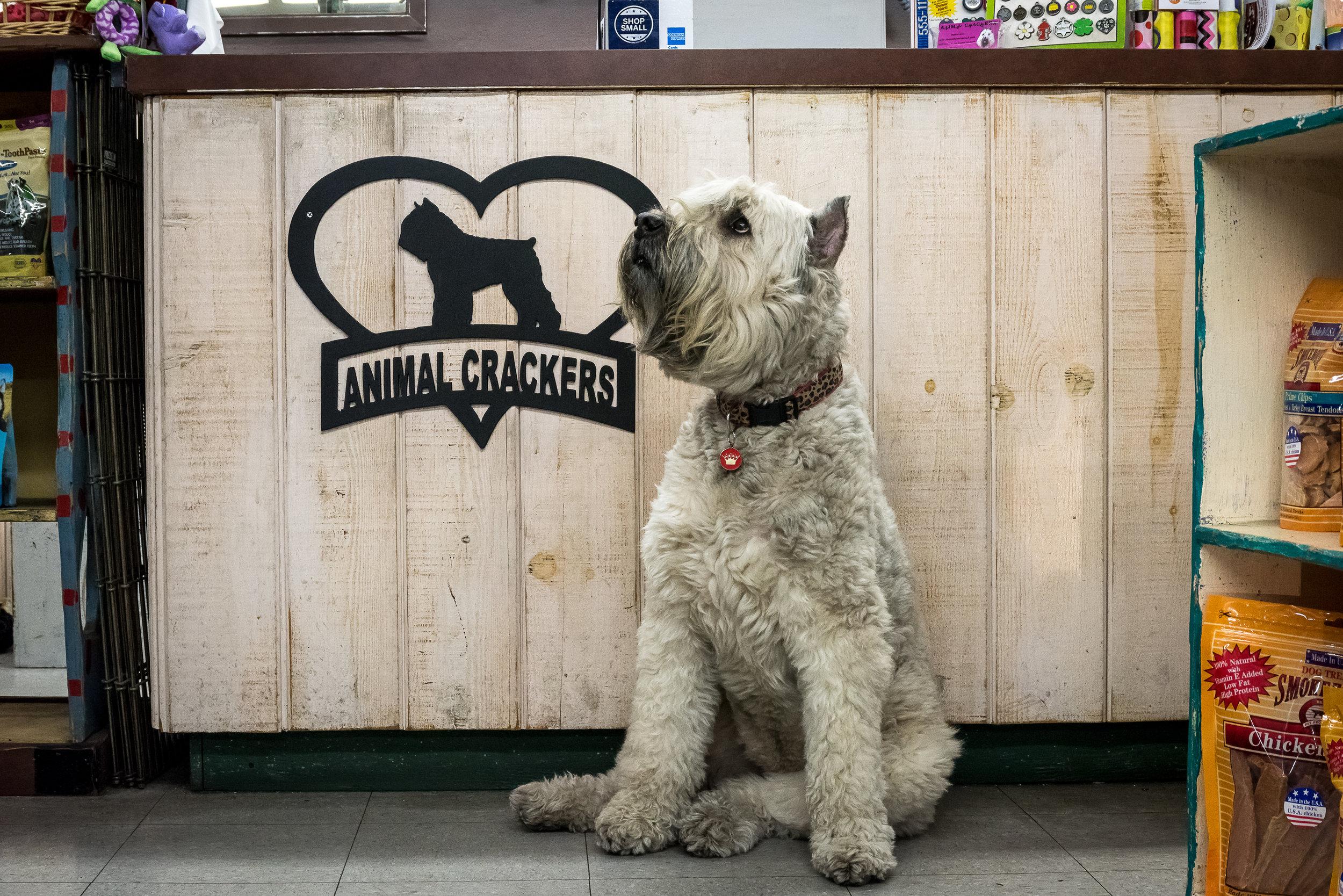 dollie-animal-crackers-pet-store-los-angeles
