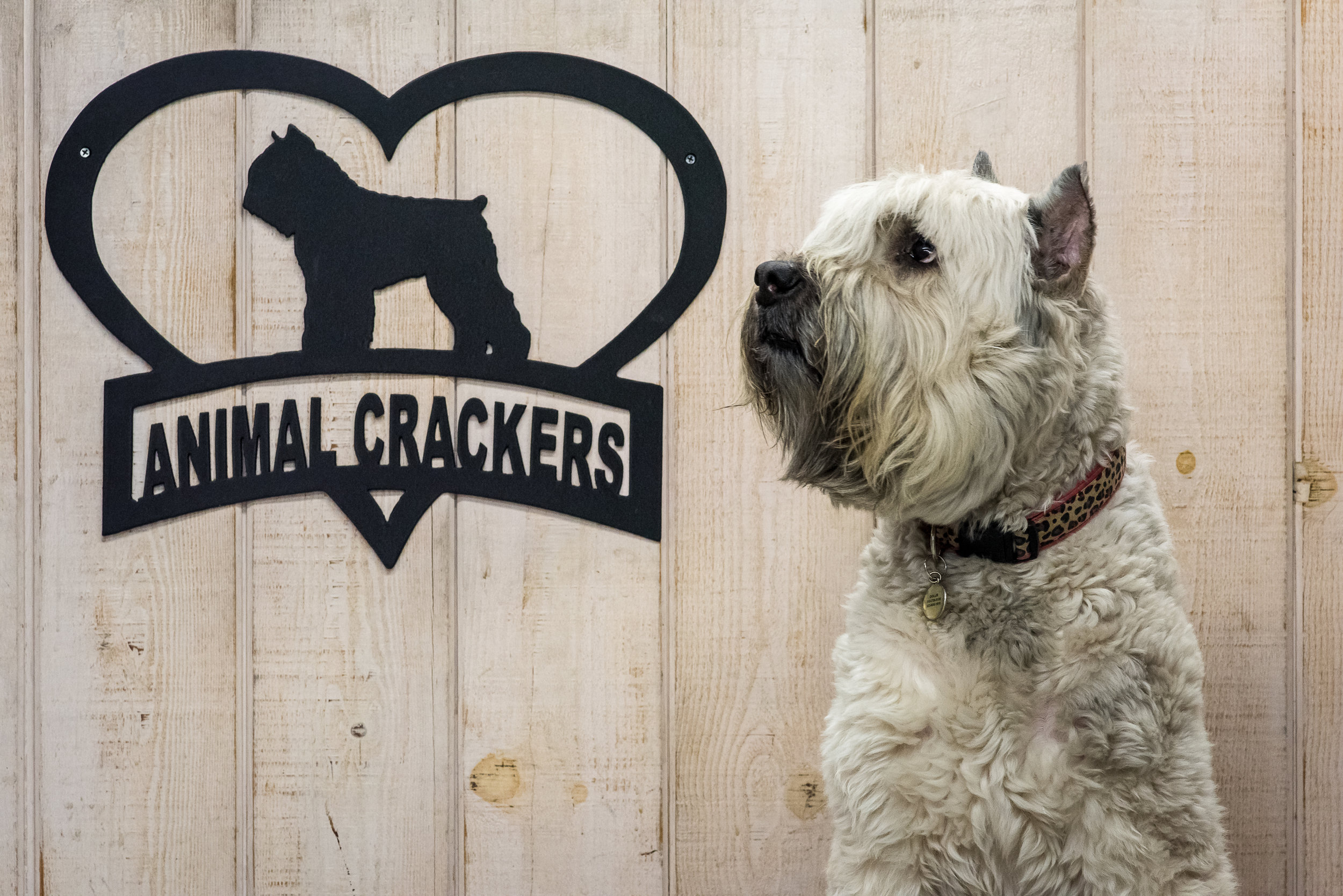 dollie-animal-crackers-pet-store-los-angeles.jpg