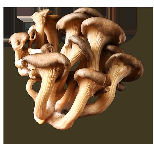 blue-oyster-mushroom-01.png